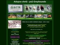 Adopce chrtů – psů Greyhounds