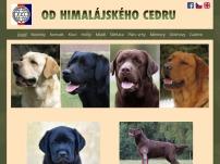 Labrador retriever – Michaela Dočekalová